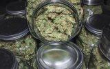 Former Barclays banker 'invests in marijuana farm'