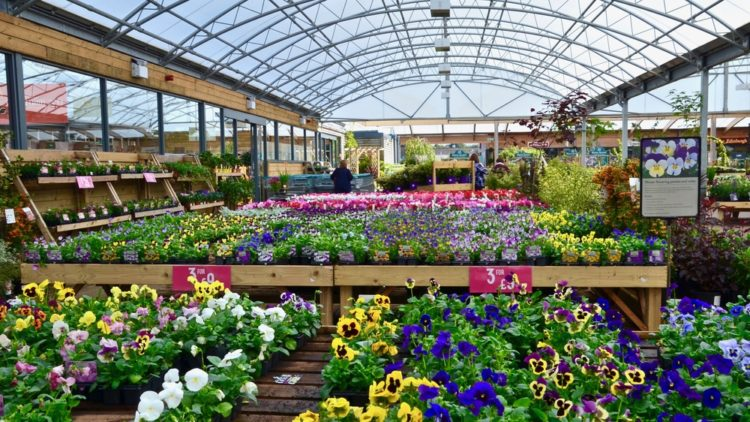 Safe trading guide for garden centres launched ahead of re-open plan